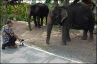 Природа. Слоны.