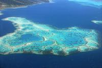 Природа. Коралловый риф.