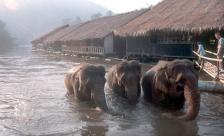 Люди. Слоны на работе.