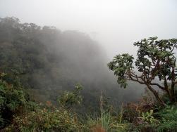 Природа. Туманные леса на плато Хортон.